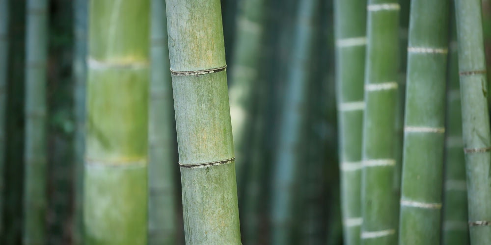 bamboo pet freindly