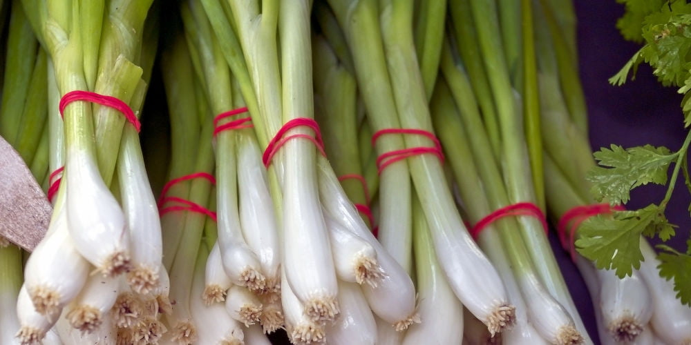 How To Grow Spring Onions - An Easy Beginner's Guide