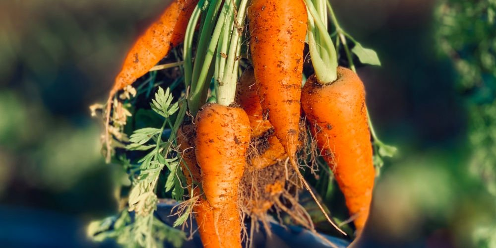 How To Grow Carrots - A Beginner's Guide