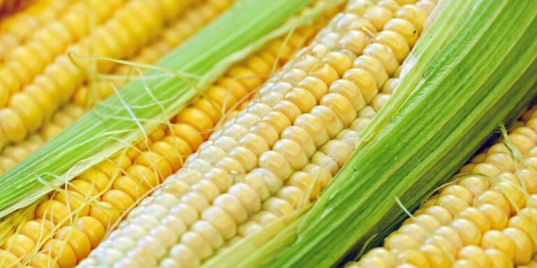 How To Grow Sweetcorn - An Easy Beginner's Guide